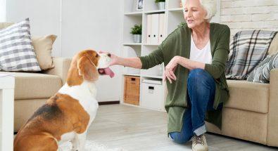 Emotional Support Animal Evaluation (ESA)